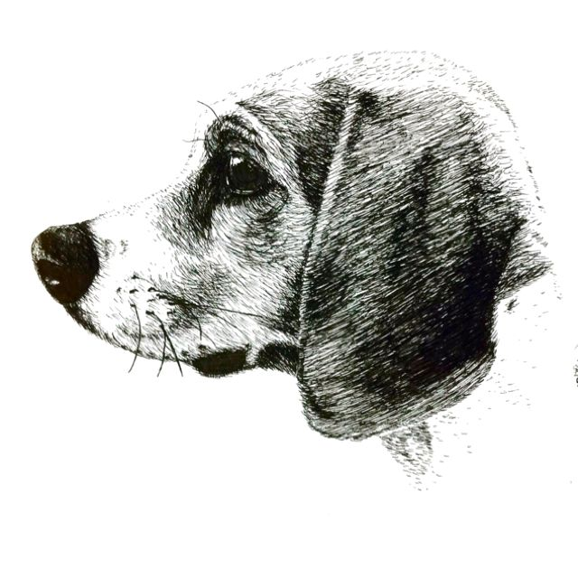 My Beagle Drawn With Pen Ink Beagle Art Beagle Tattoo Paw Art