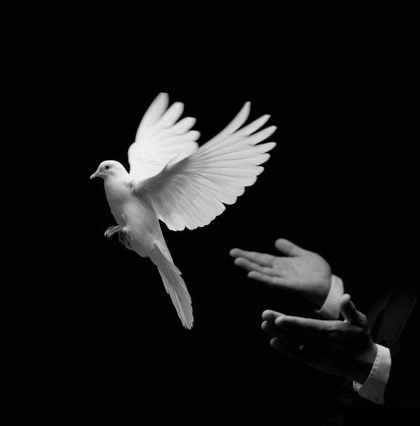 δωρεάν ταινίες μαύρο πουλί XXX Κατάμαυρος/η
