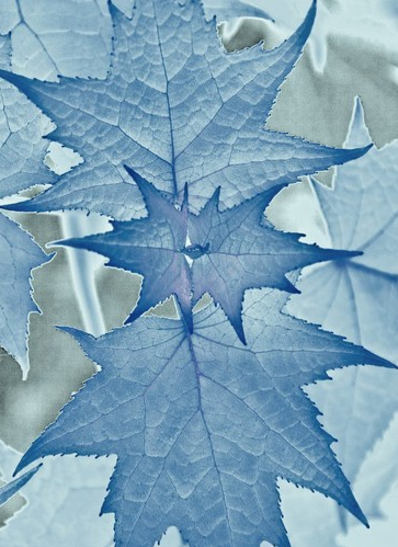 Leaves #blue