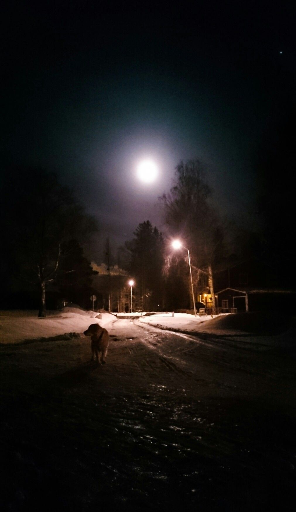 Me and my dog taking a walk in the moon light photographing me and my dog taking a walk in the moon light arubaitofo Image collections