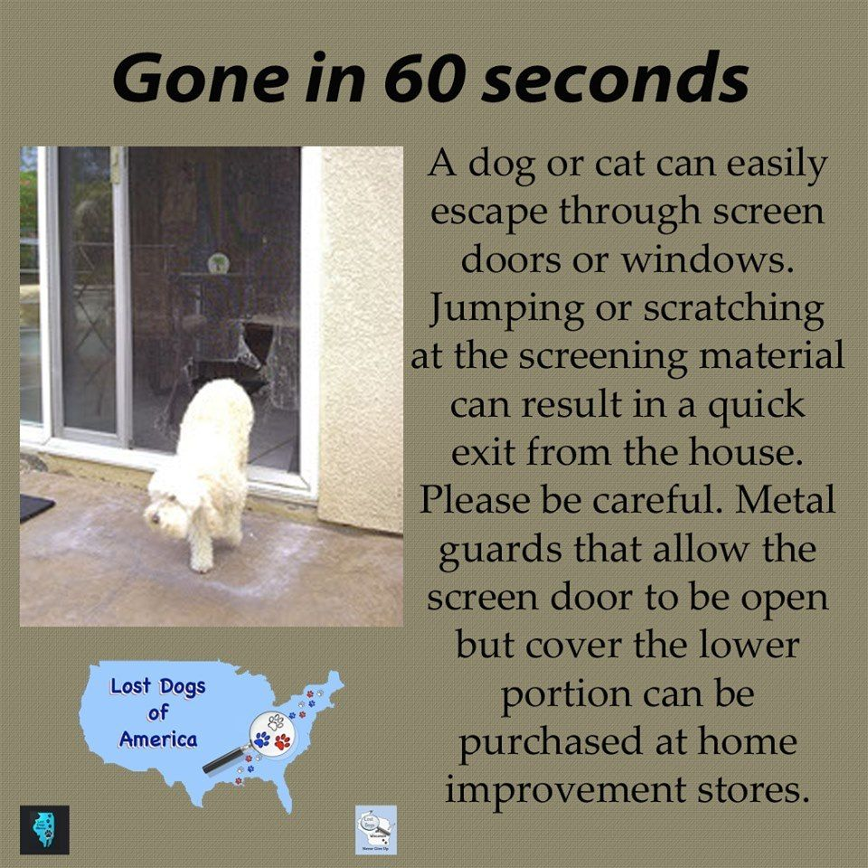 A Dog Or Cat Can Easily Escape Through Screen Doors Or Windows Jumping Or Scratching At The Screening Material Can R Losing A Dog Gone In 60 Seconds Pet Hacks