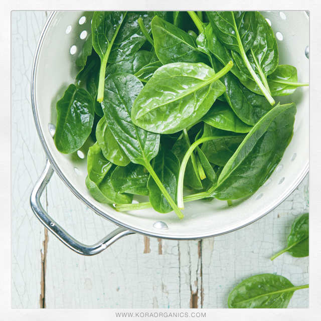 Did you know that spinach is packed with vital nutrients such as iron and beta-carotene? It's also a great source of fiber! Comment below and tell us how you enjoy adding spinach into your diet! xxx KORA Organics