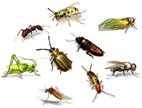 Mark S Pest Control We Have A Range Of Electronic Flying Insect Killers Pesttreatment Pestcontrol Doityourselfpestcontrol Pe Pest Control Insects Insect Pest