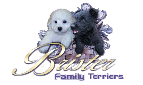 Guest Book Brister Family Terriers Scottish Terrier Puppy Scottish Terrier Bichon Frise Puppy