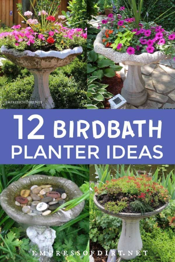 Create a Garden Art Birdbath Planter is part of Bird bath garden, Country garden landscaping, Garden design, Bird bath, Bird bath planter, Natural garden - This is a good idea for a cracked garden birdbath turn it into a beautiful planter for your yard  You can plant directly in the bowl or insert containers to ensure good drainage for the plants  Have a look at the getting started tips and browse the photos for creative ideas