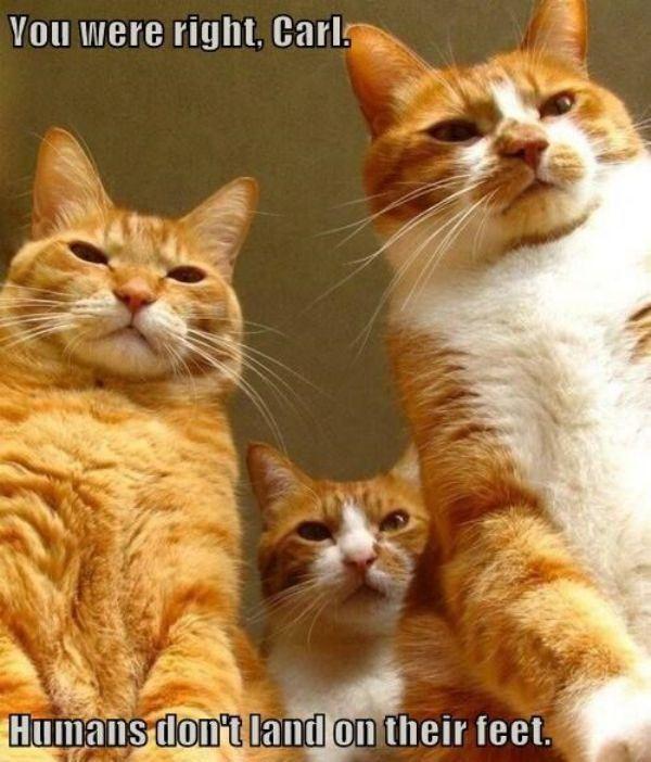 Was Katzen eigentlich denken | Was is hier eigentlich los #cuteanimalphotos