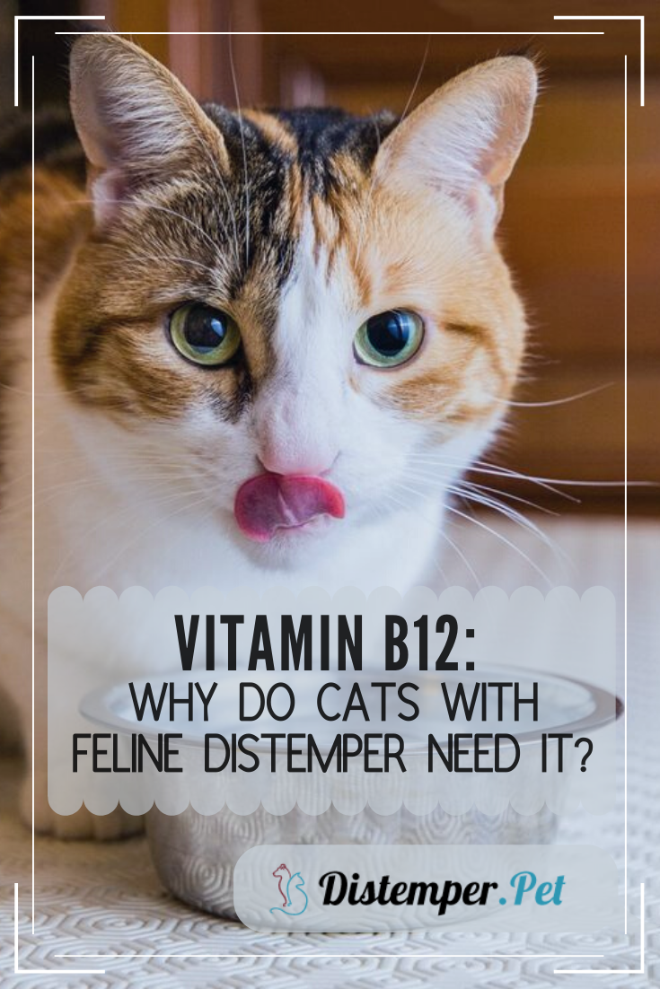 Vitamin B12 Why Do Cats with Feline Distemper Need It