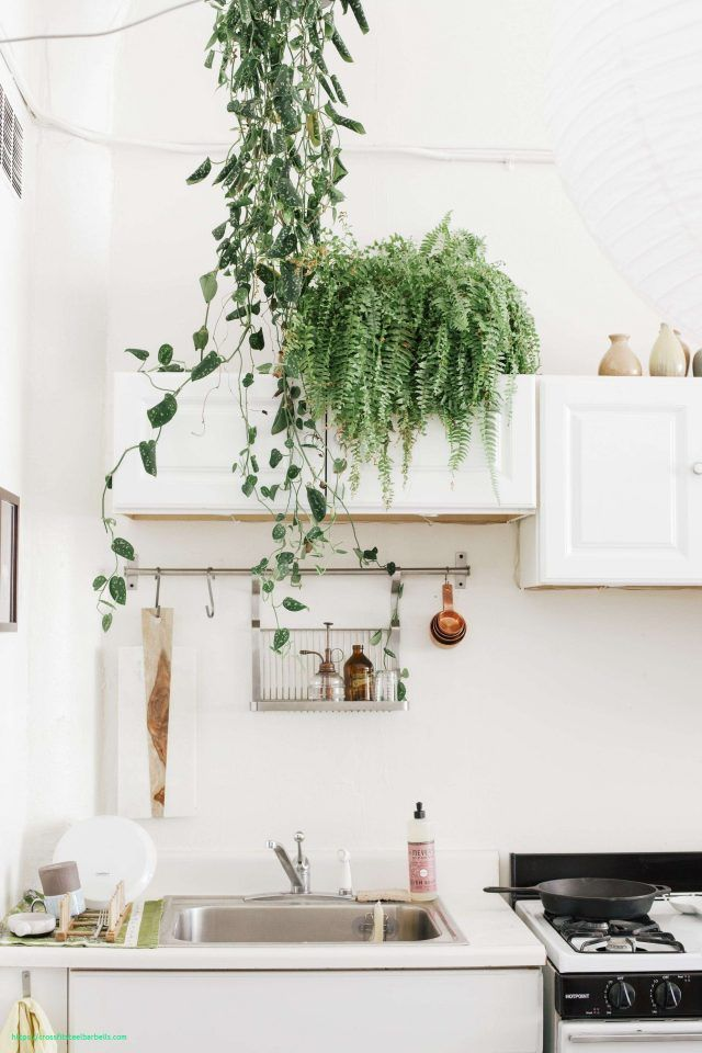 Cuisine Plante Dessus Meuble Decoration Kitchen Home