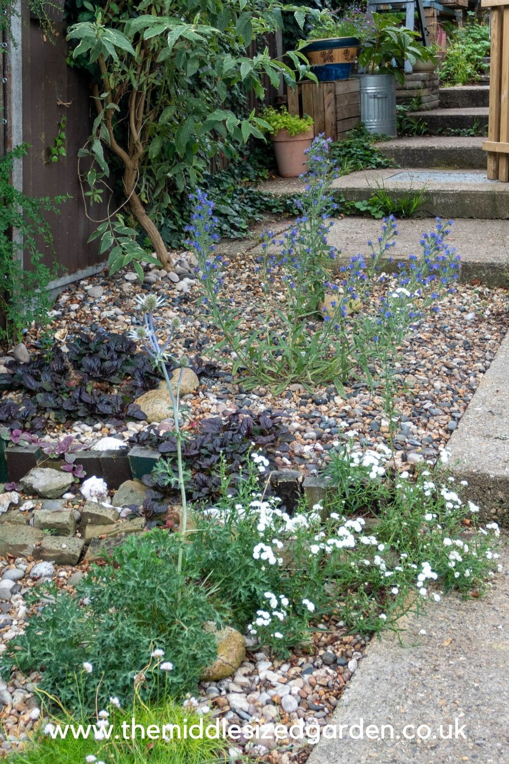 North facing garden tips - how to make the most of your ...