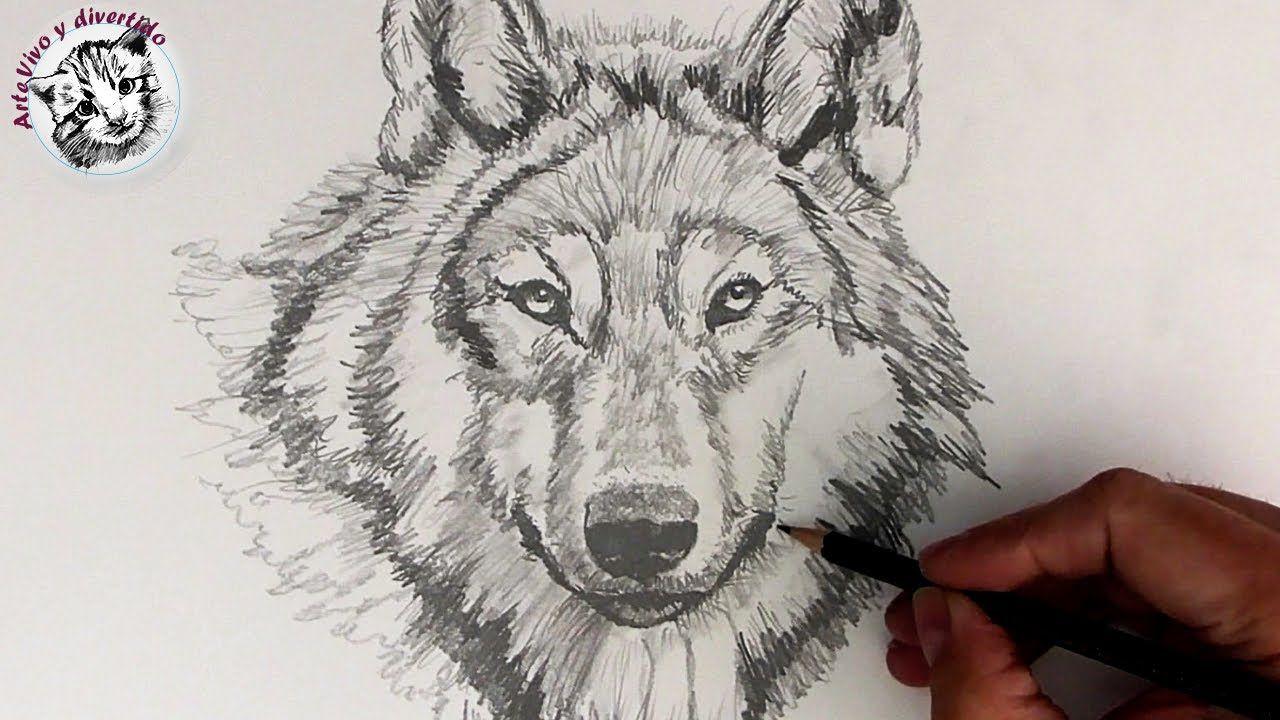 Como Dibujar Un Lobo Realista Con Lapiz Paso A Paso Y Muy Facil Como Dibujar Un Lobo Lobo Dibujo A Lapiz Como Dibujar