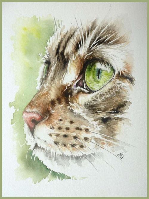 Aquarelles Animaux Aquarelle Chat Peinture De Chat Dessin Chat