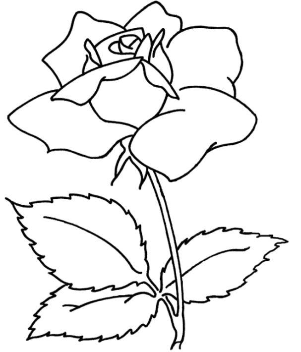 Mewarnai Gambar Bunga Mawar Projects To Try Printable Flower