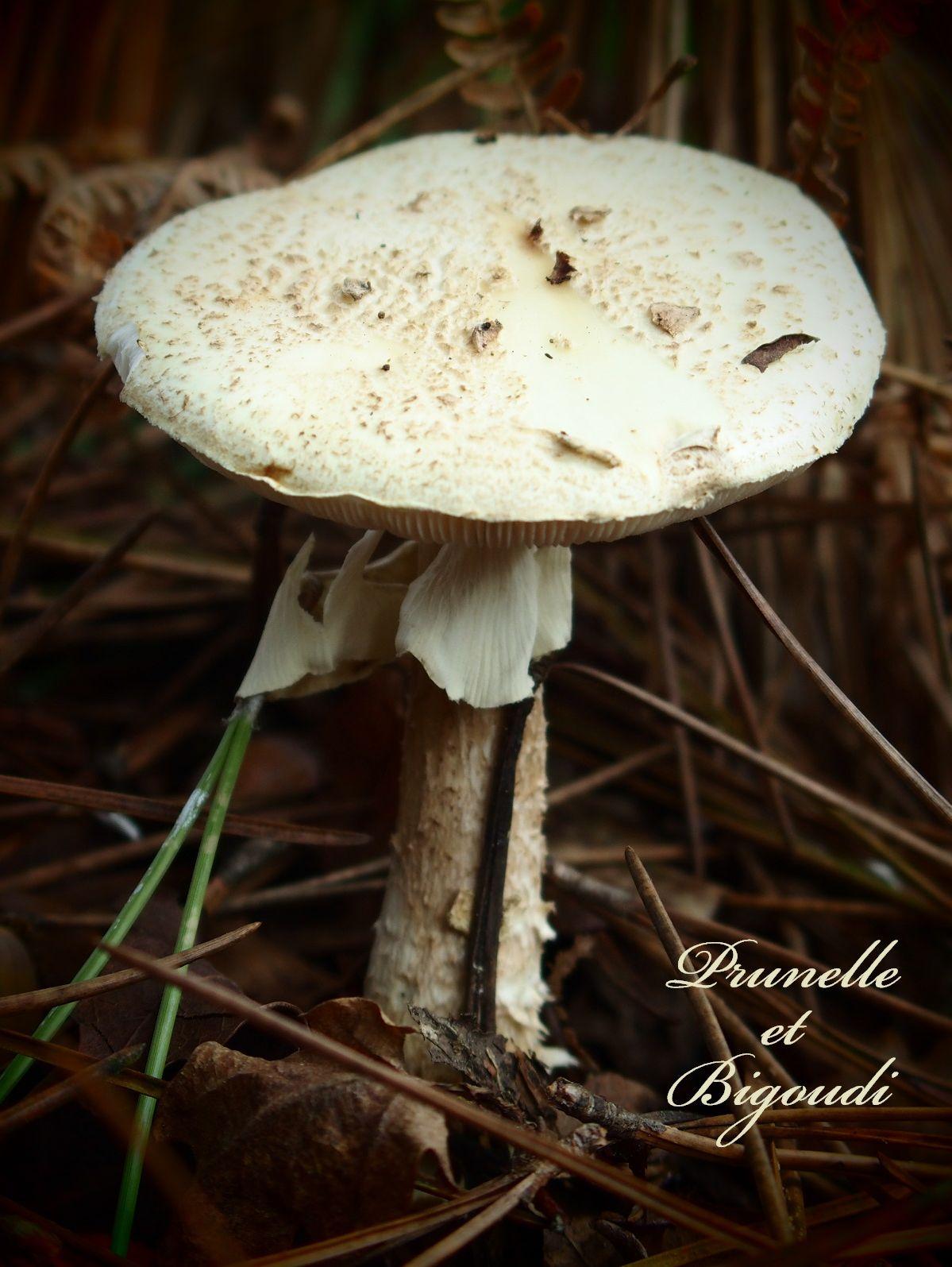 Champignon... Prunelle et Bigoudi http://prunelle-et-bigoudi.fr/