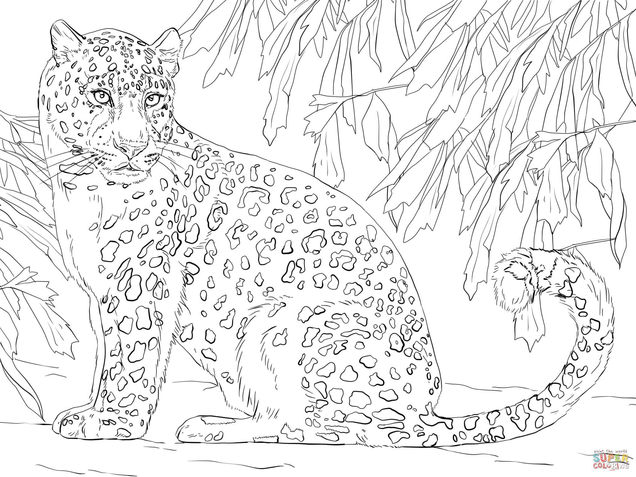 Amur Leopard Super Coloring Coloring Book Art Leopard Drawing Coloring Pages [ 1536 x 2048 Pixel ]