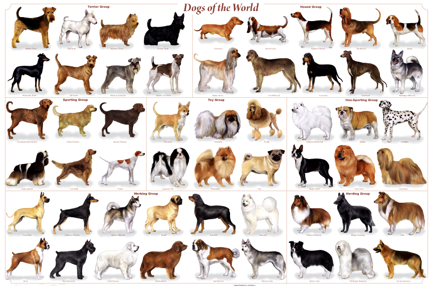 Http Meganotas Com Wp Content Uploads 2013 06 Razas De Perros Png Razas De Perros Medianos Razas De Perros Perros Medianos