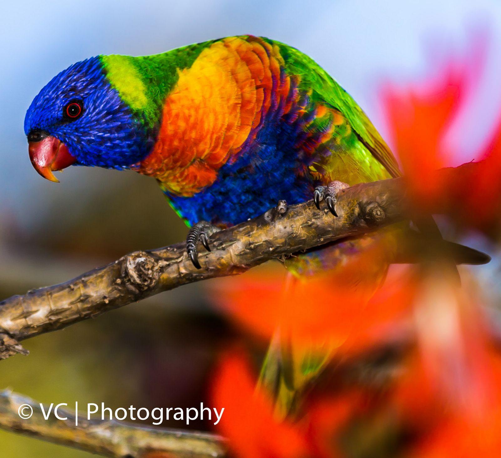 https://flic.kr/p/wdK2AA   Birds-Matilda Bay-02