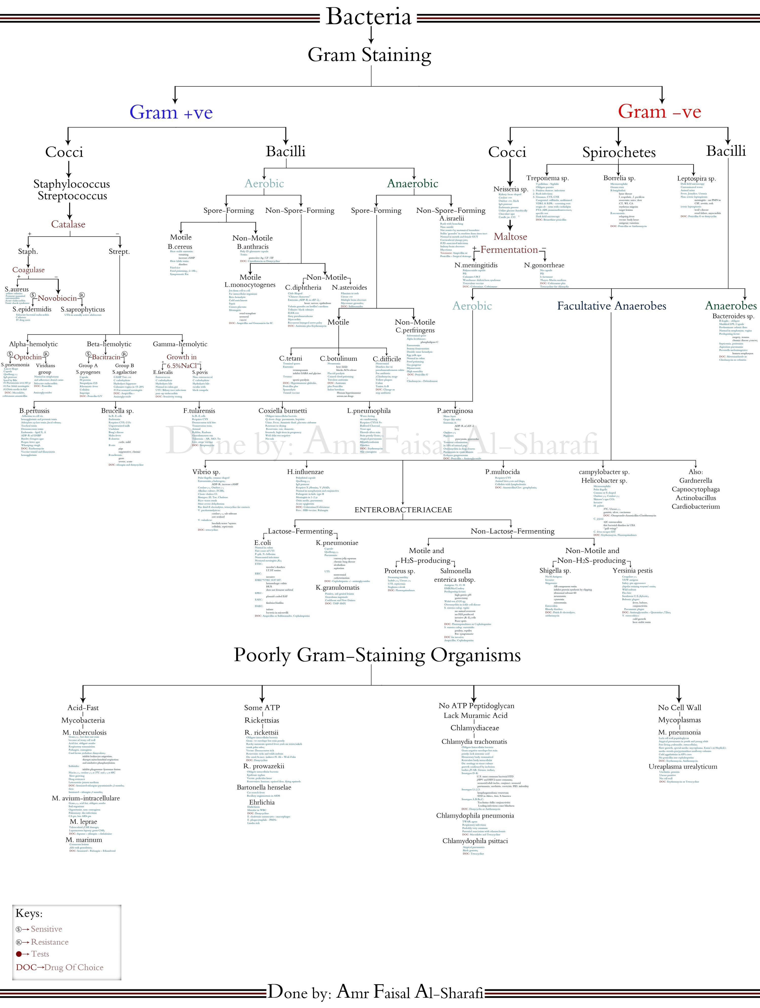 Smaller3g 30003977 pixels clinical lab science pinterest high yield bacteriology chart by amr faisal the paradigm shift group nvjuhfo Gallery