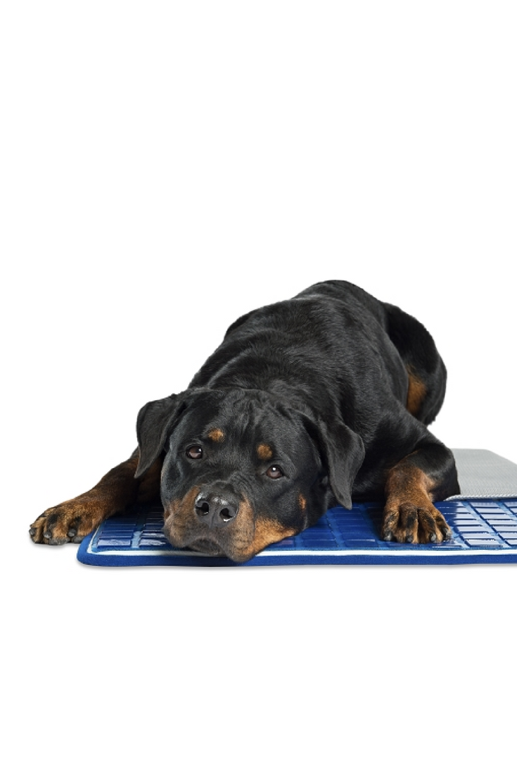 Keep Your Pet Cool With A Theracool Gel Cell Cooling Pad From Enchanted Home Pet Pet Cooling Pad Dog Pads Pet Cooling Mat