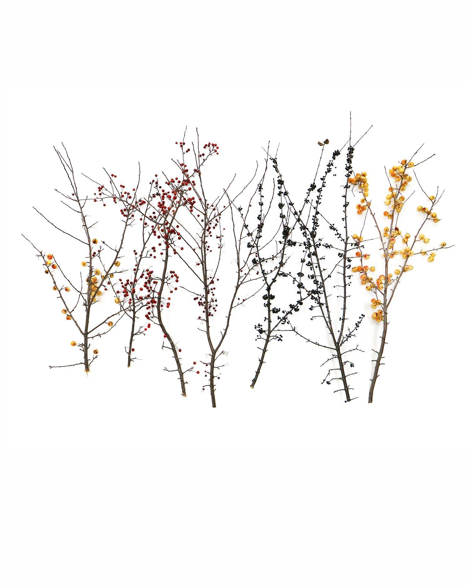 fall fruits (mary jo hoffman)