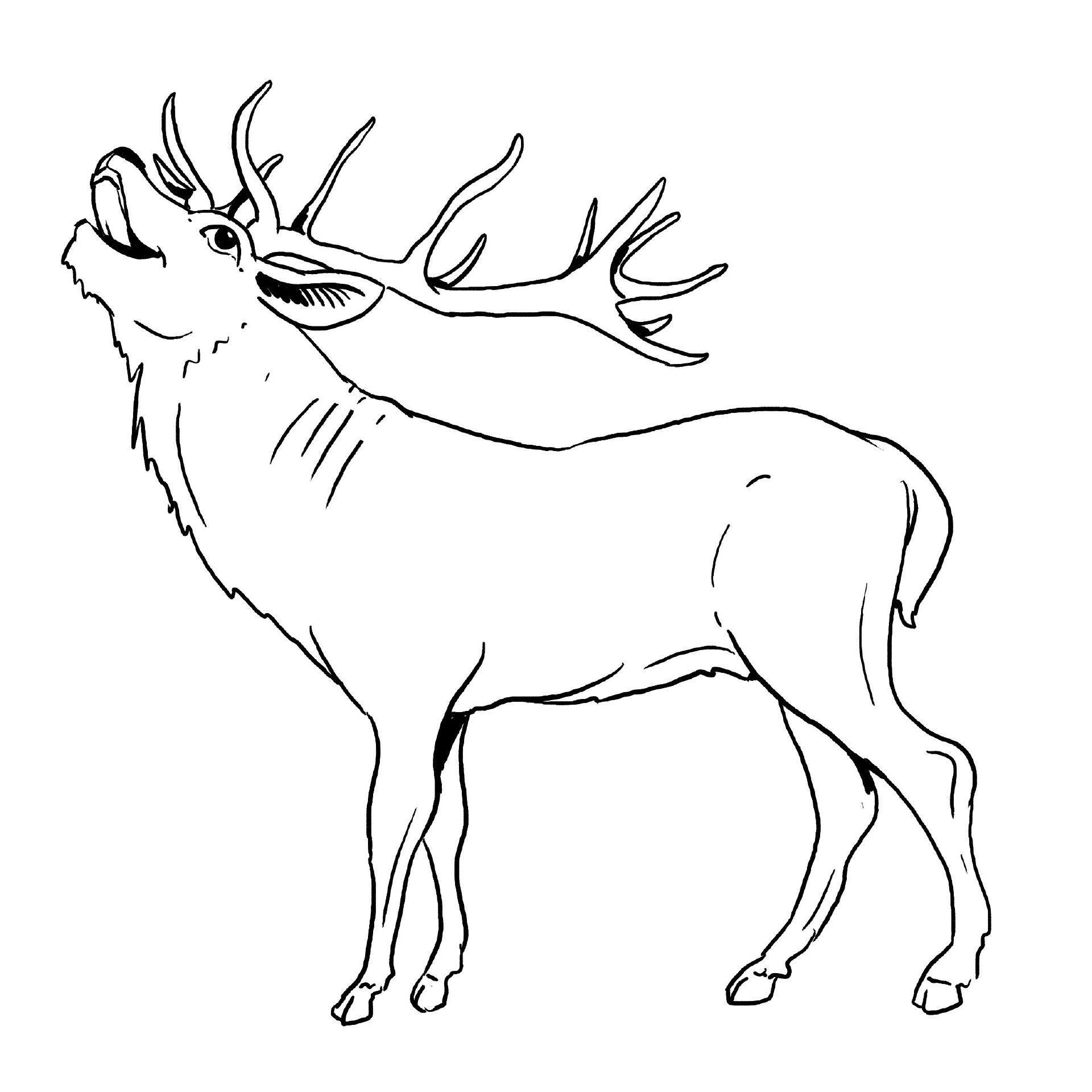 Elch Malvorlagen Kostenlos  Ausmalbilder tiere, Malvorlagen