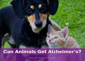As Our Pets Age They Can Display The Same Symptoms Of Dementia As People Do Learn To Recognize The Signs To Help Them Live Better Top Dog Breeds Pets Dog Cat