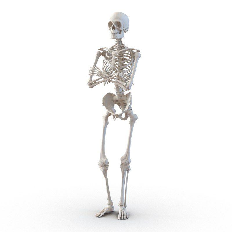 human male skeleton pose 3d model | 3D Anatomy in 2019
