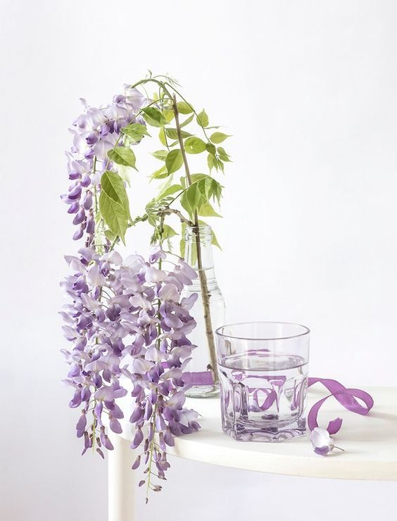 Pin By Babs Color Theme On Wisteria Pretty Flowers Wisteria Flowers