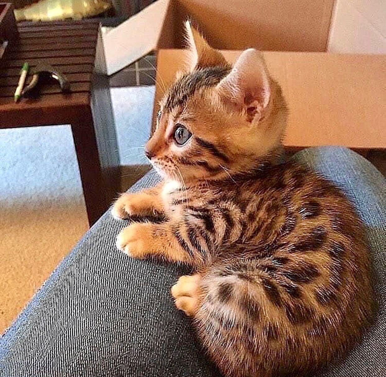 Tierbabys Baby Katzen Katzen