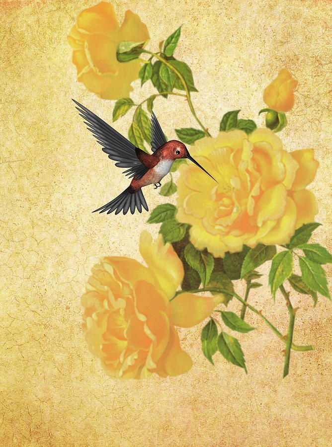 yellow rose tattoo with hummingbird - Yahoo Image Search ...