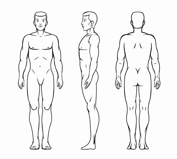male body vector illustration human body drawing vector illustration illustration male body vector illustration human