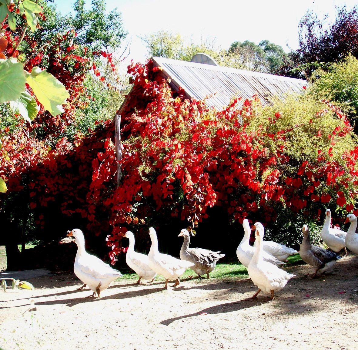 Original stone house, lavandula   swiss italian lavender farm ...