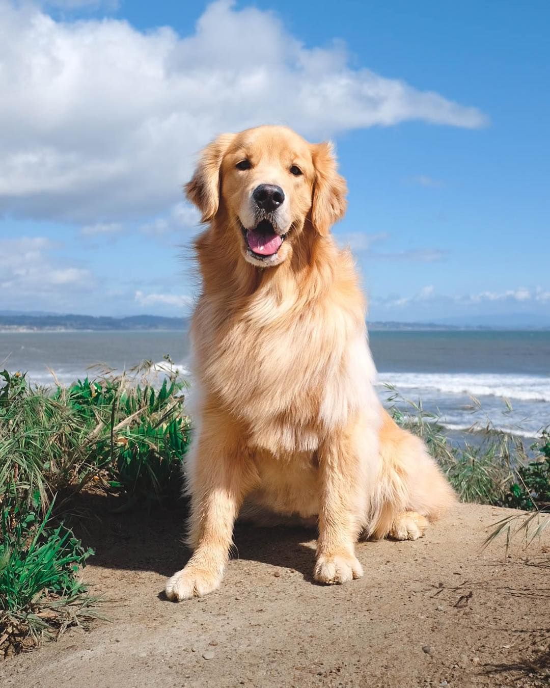 Maya The Golden On Instagram Came For The Picture Stayed To