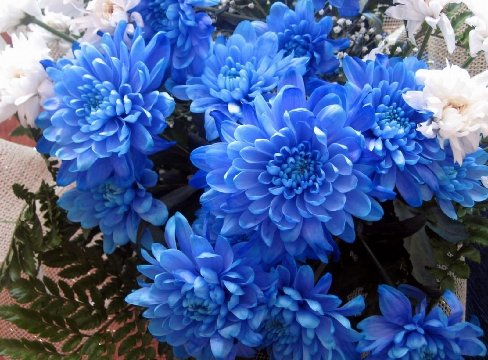 blue chrysanthemum bouquet - Google Search | life ...