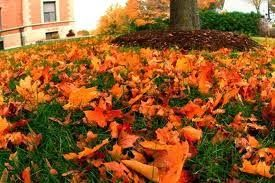 Book Reader's Heaven: Leaves in Adornment - Poetry by Adolfo... Response by Moi... A Tribute to Beautiful Fall...
