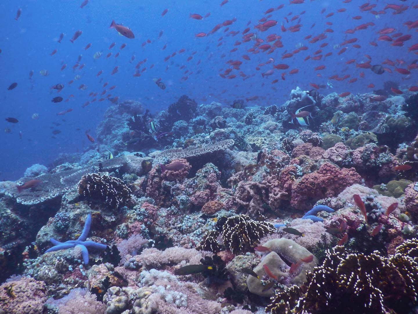 Scuba Diving Experience In Anilao Batangas Philippines Diver Bliss In 2020 Scuba Diving Beach Activities Swimming Activities