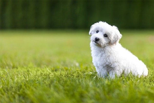 6 Allergiker Hunde Rassen für Tierlieber mit Schnupfen