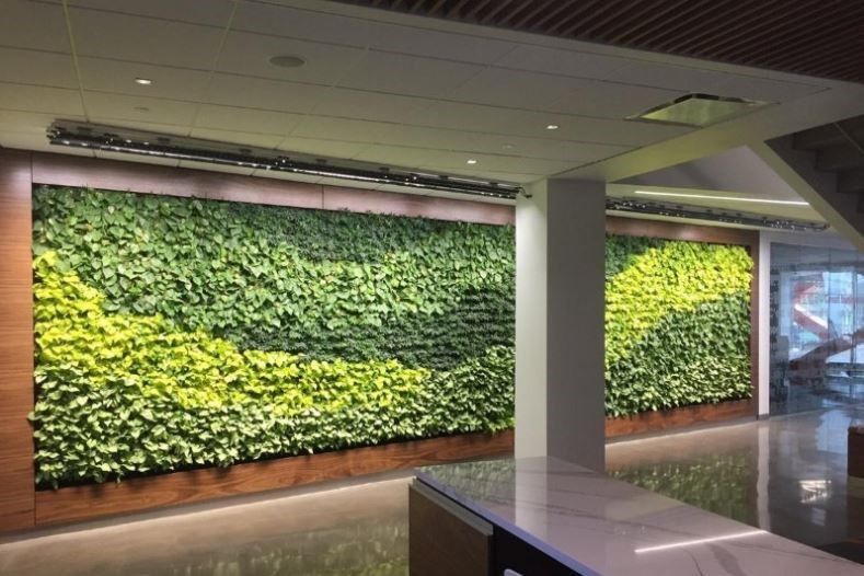 Living Plant Walls With Images Green Wall Plants 640 x 480
