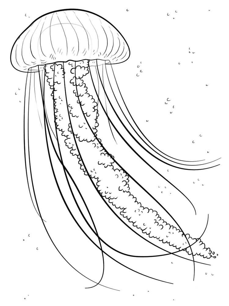 Jellyfish Ocean Drawing Fish Coloring Page Jellyfish Drawing