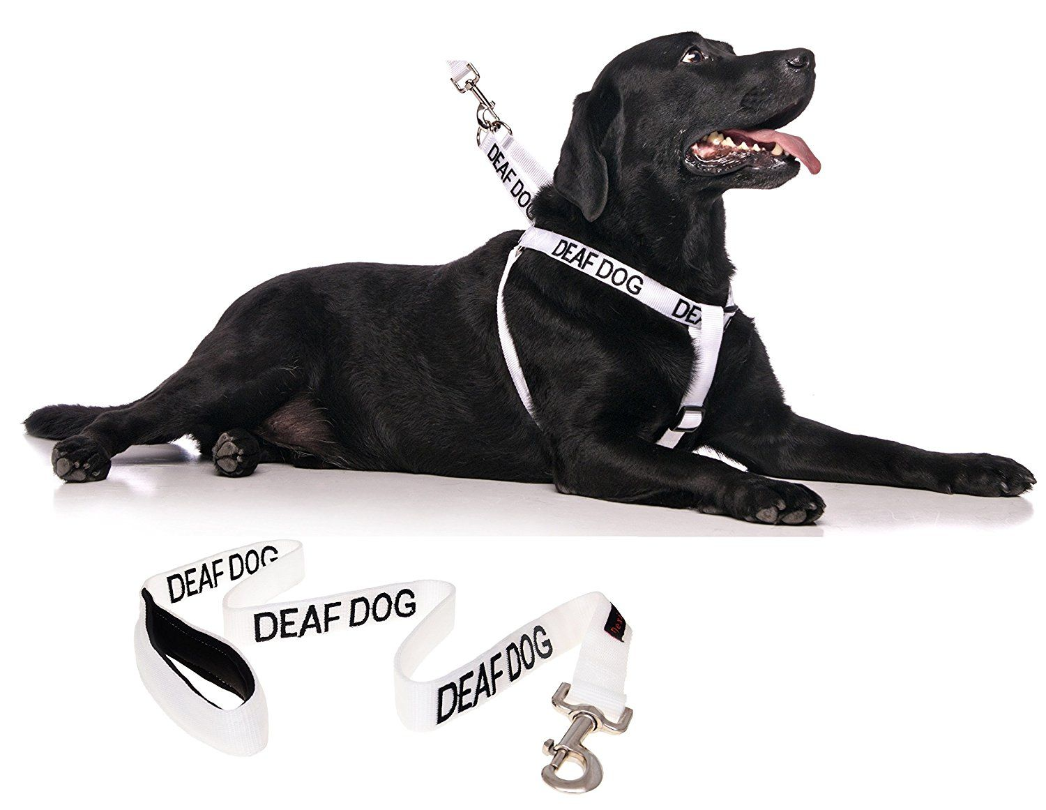 Deaf Dog White Color Coded L Xl Non Pull Dog Harness And 2 4 6 Foot Padded Leash Sets No Limited Hearing Prevents Accidents By Warn Dog Harness Deaf Dog Dogs