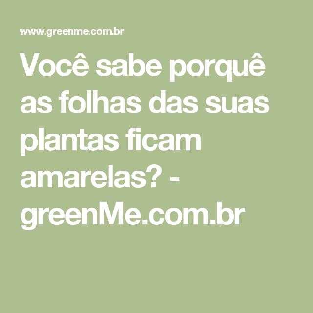 Você sabe porquê as folhas das suas plantas ficam amarelas? - greenMe.com.br