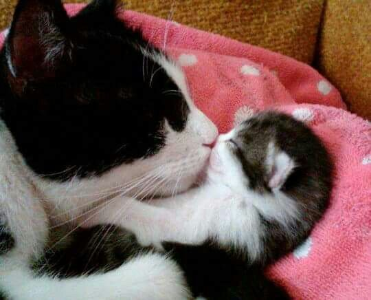 Kisses from momma cat