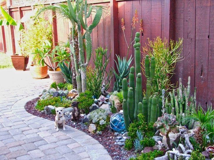 Backyard Cactus Garden   Google Search