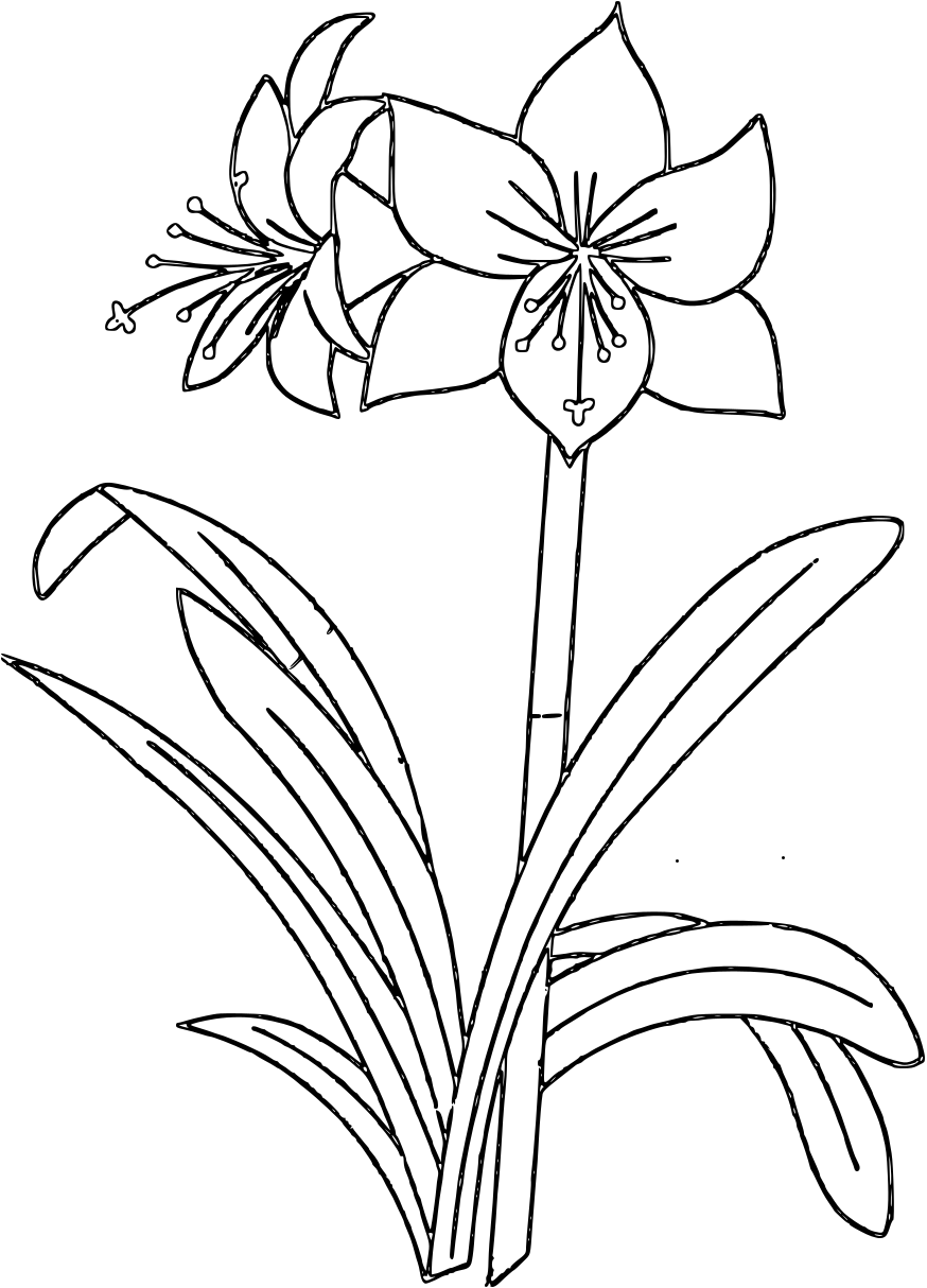 Flower Coloring Pages Coloring Pages Flower Coloring Pages Amaryllis