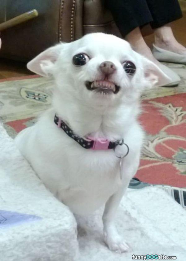 Big Huge Smiles Funnydogsite Com Happy Animals Dog Pictures