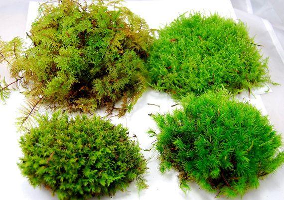 Live moss mix Terrarium moss vivarium moss for miniature or fairy
