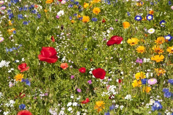 Laka Kwietna Wild Flowers Plants Garden