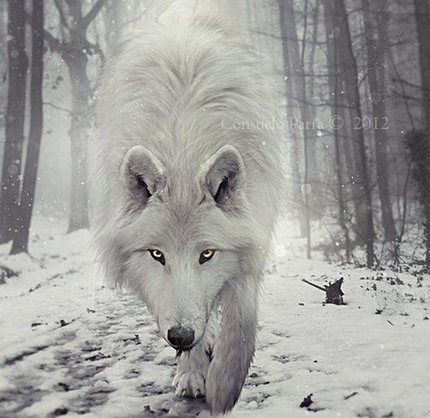 Lobo Wallpaper Buscar Con Google Animales Pinterest Wolf