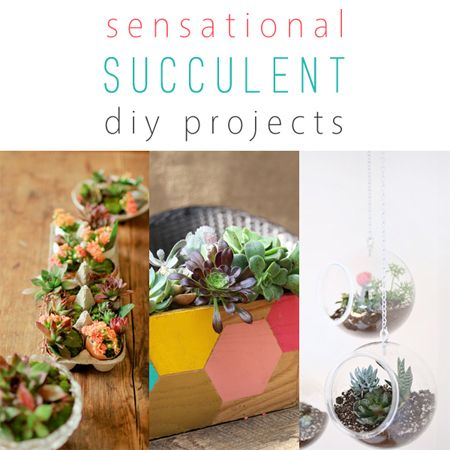 Sensational Succulent DIY Projects - The Cottage Market