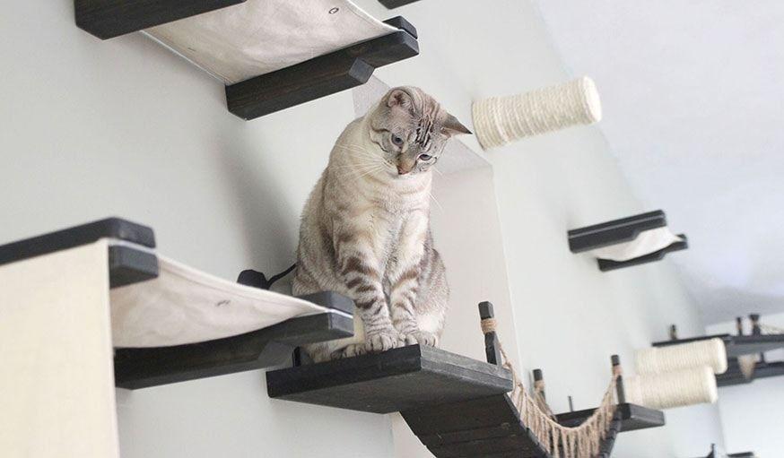 12 Parcours Geniaux Pour Votre Chat Acrobate Maison De Chat En