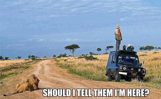 """People on a safari in Africa looking the other way, while a lion is behind them, entitled """"Should I tell them I'm here?"""""""